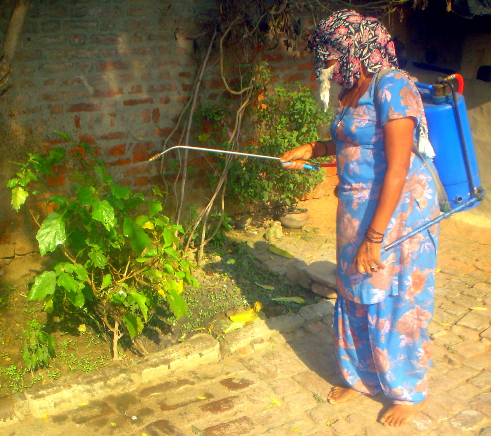 women empowerment in agriculture