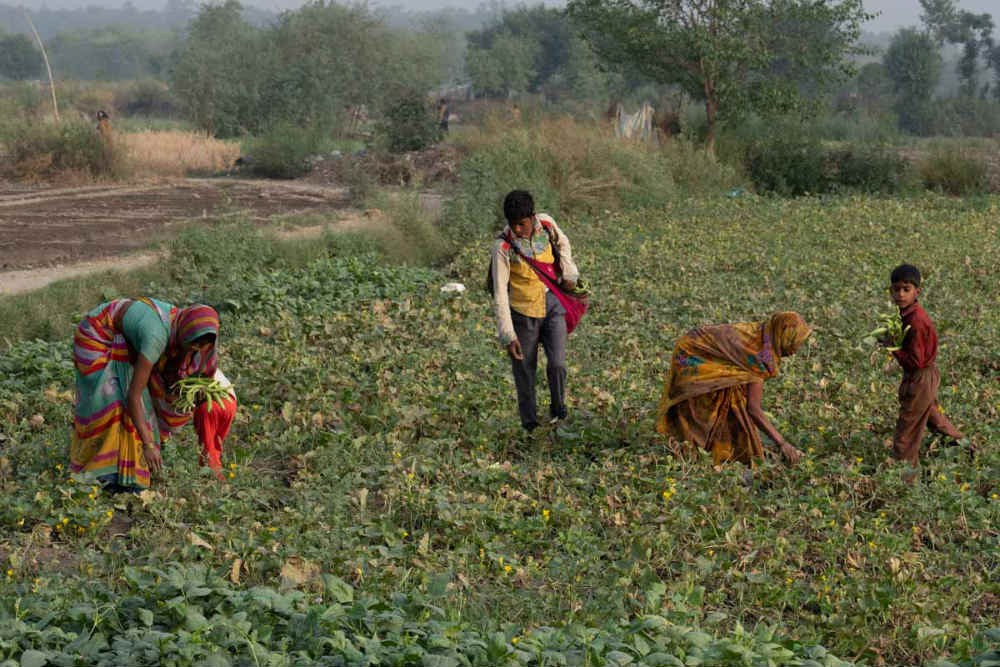 The students belong to families of agricultural farmers that grow vegetables and work in garden nurseries of the Yamuna bed in Delhi.