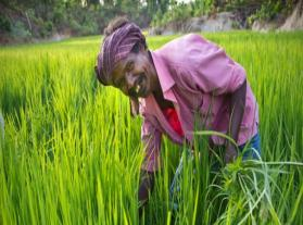 TATA consultancy services – empowering farmers with mobile technology