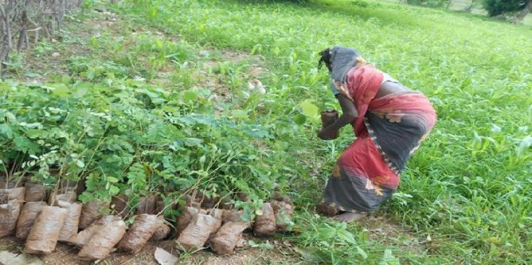 Climate change affecting women farmers the most in Chhattisgarh
