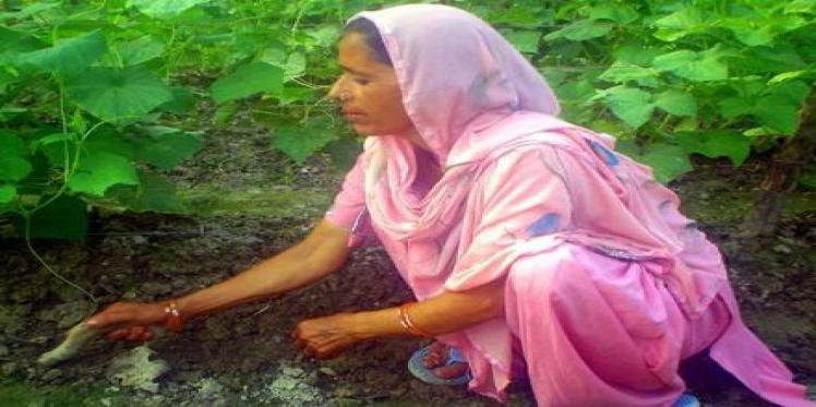 Hard work is the key to success: Kamlesh, a woman farmer