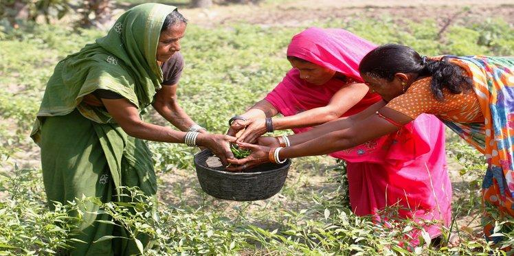 Empowering women farmers in India