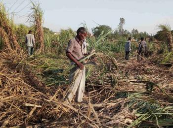 Structural injustice in Sugar Cane Agriculture